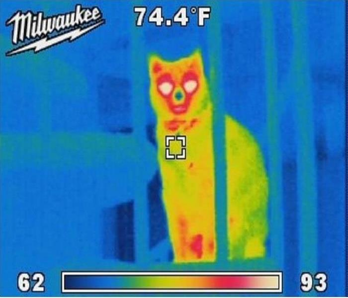 Outline of a cat in wall detected by thermal imaging camera