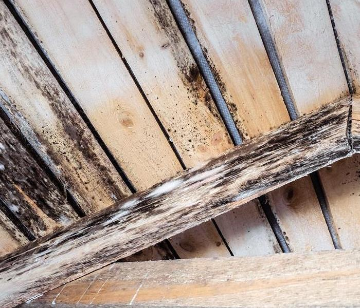 Mold on wood beamed ceiling