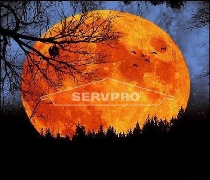 Orange harvest moon at night with bats and a SERVPRO logo on the moon.